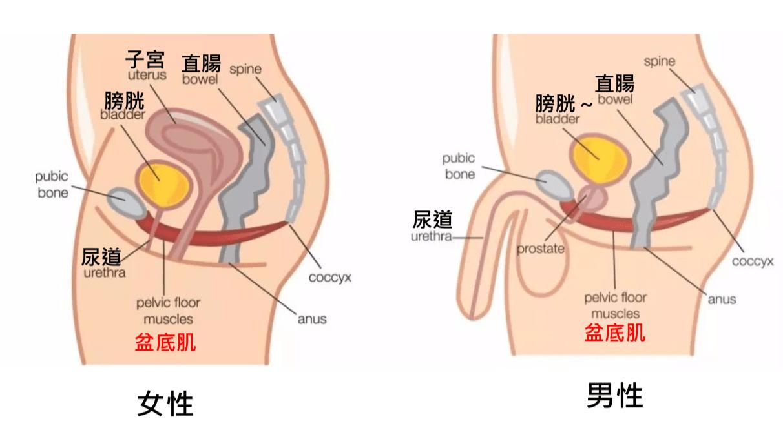 Emsella G動椅 5